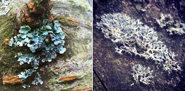 Foliose-lichen-on-tree-and-roof-The-Last-Krystallos