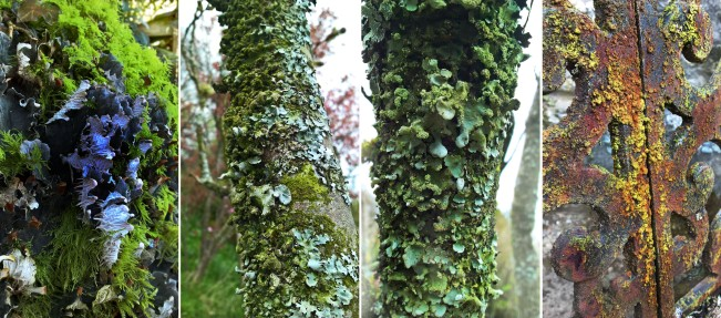 Fruticose-Foliose-Crustose-Lichen-on-Moss-tree-bark-rust-The-Last-Krystallos