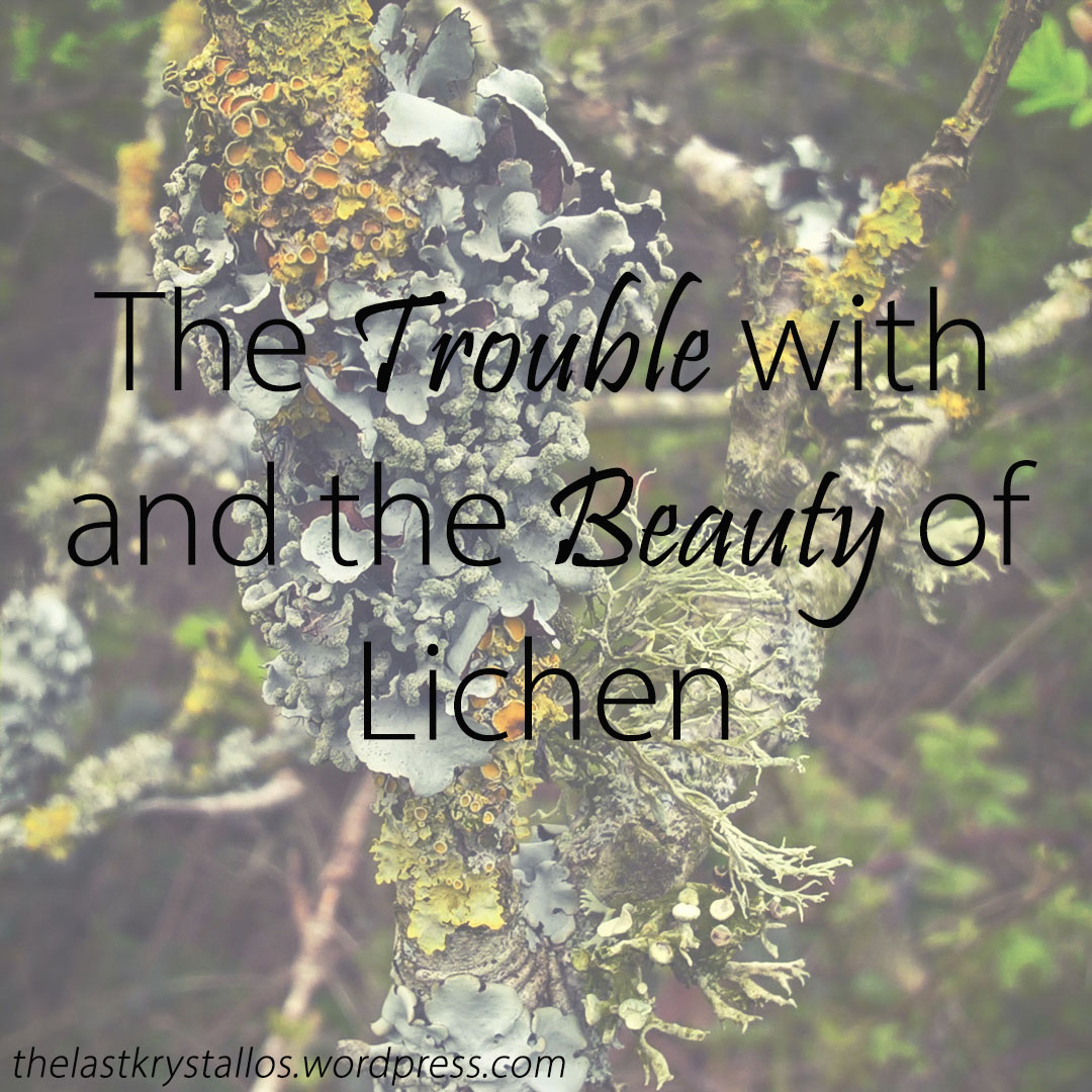 The-Trouble-with-and-the-Beauty-of-Lichen-The-Last-Krystallos