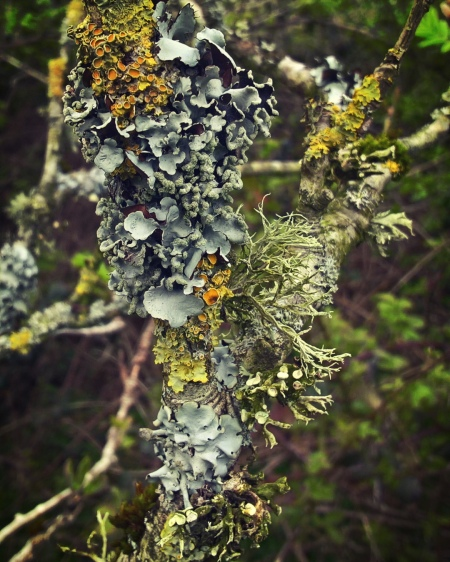 The-Trouble-With-Lichen-The-Last-Krystallos-five-varieties-of-lichen