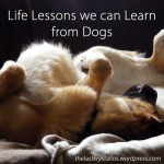 Life Lessons we can Learn from Dogs - The Last Krystallos