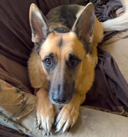 Mental Health Awareness - dog - the last krystallos