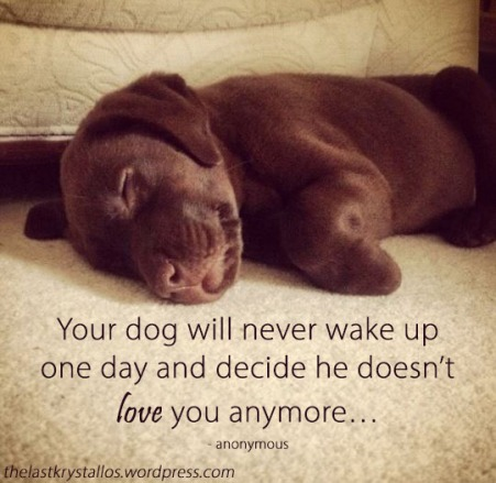 Your dog will never wake up one day and decide he doesn_t love you anymore… anonymous - The Last Krystallos