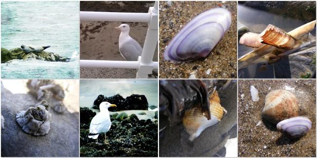 Wildlife-and-Shells-The-Last-Krystallos