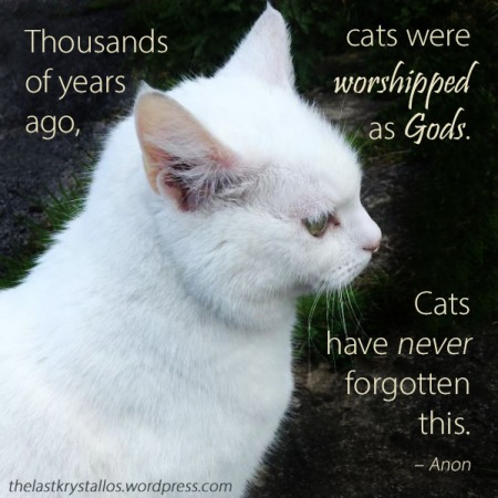 Cats worshipped as Gods...Cats have never forgotten this - Anon - The Last Krystallos - Photo Caitlin Shambrook