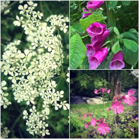Cow Parsley, Foxglove and Red Campion - The Last Krystallos