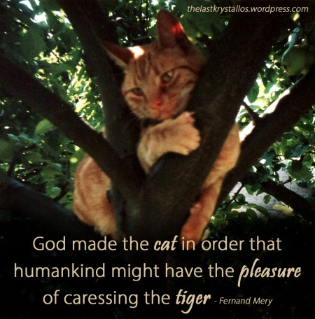 God made the cat - pleasure of caressing the tiger - Fernand Mery - The Last Krystallos