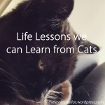 Life Lessons we can Learn from Cats - The Last Krystallos