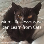 More Life Lessons we should Learn from Cats - The Last Krystallos