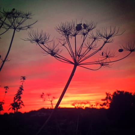 Sunset and Cow Parsley - The Last Krystallos