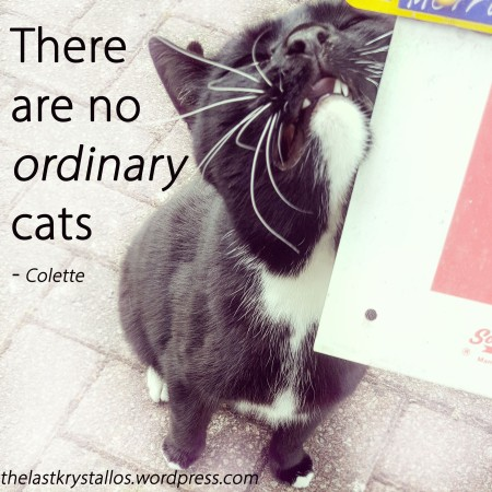 There are no ordinary cats - Colette - The Last Krystallos