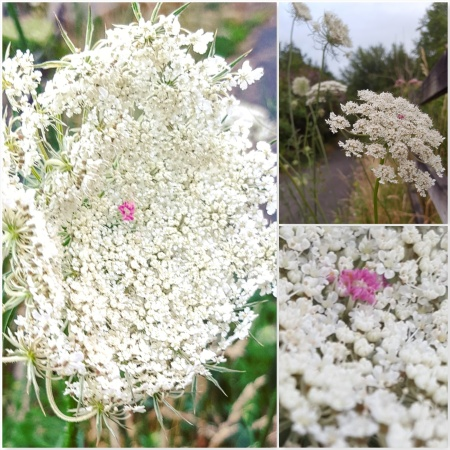 Wild Carrot - The Last Krystallos