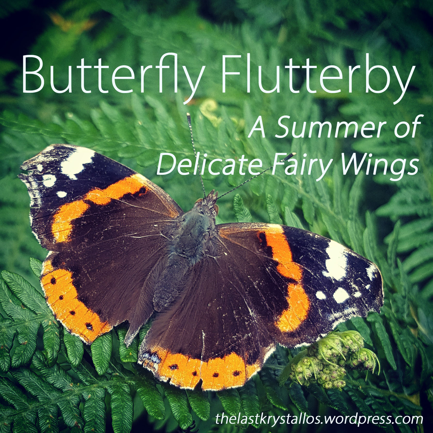 Butterfly Flutterby - A Summer of Delicate Fairy Wings - The Last Krystallos