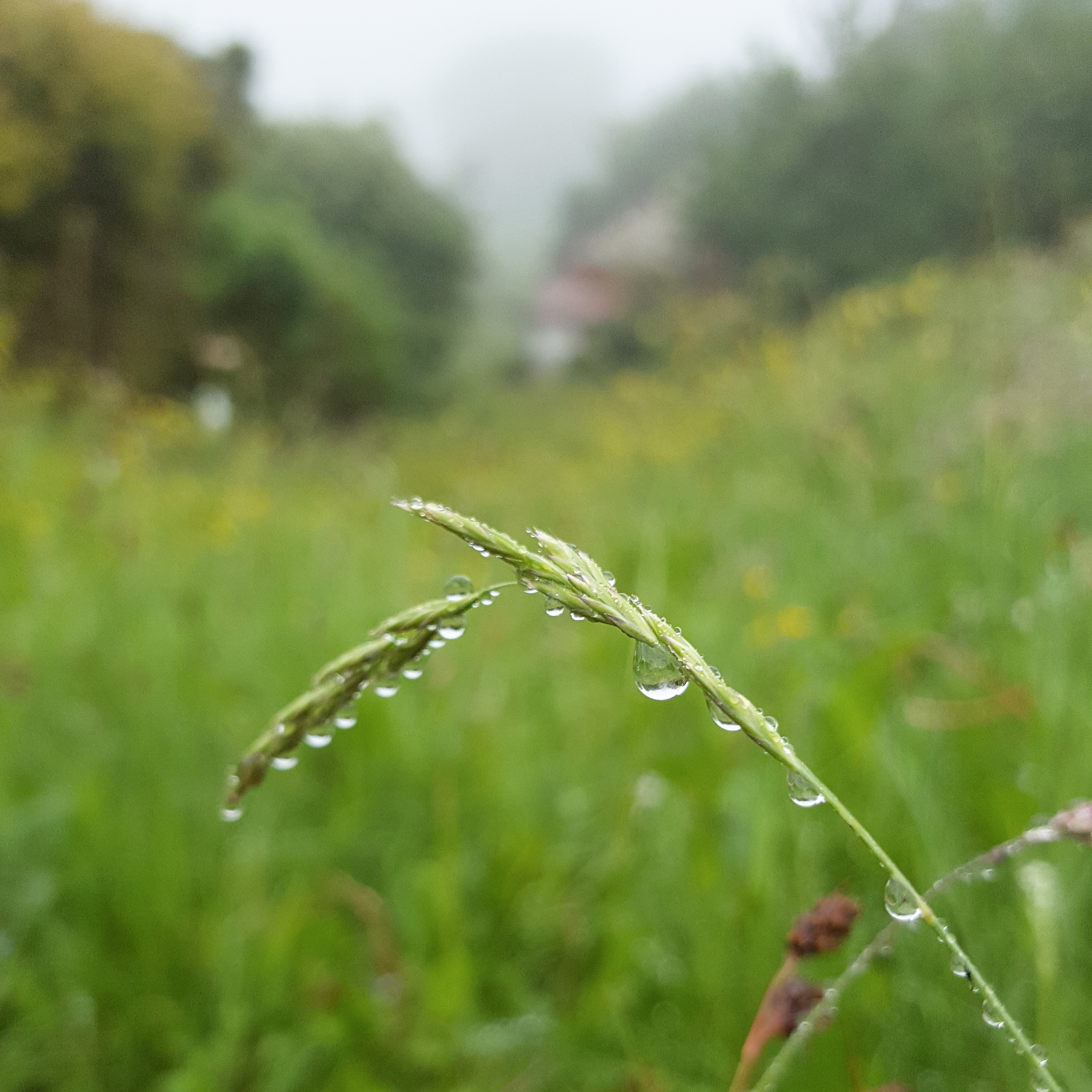 Coping-with-Alzheimer's-raindrops-The-Last-Krystallos
