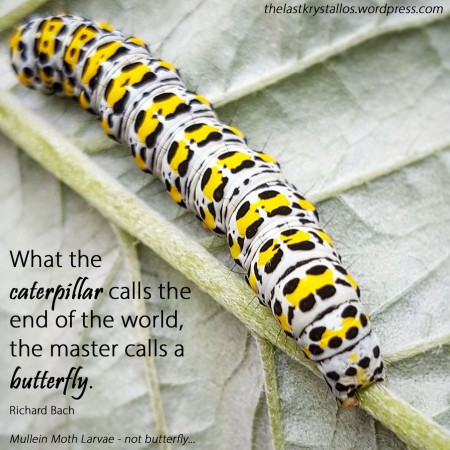 Mullein-Moth-Larvae-Caterpillar -The-Last-Krystallos - caterpillar end of the world a butterfly-Richard Bach