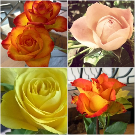Rose colour meanings the last krystallos orange and yellow roses the last krystallos mightylinksfo