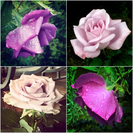 Purple-Roses-The-Last-Krystallos