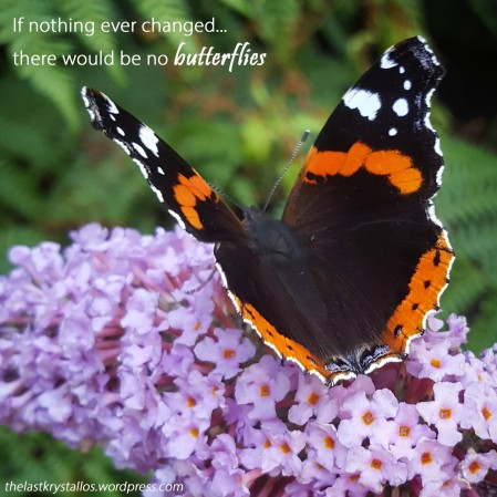 Red-Admiral-Butterfly-Buddleia-The-Last-Krystallos-If nothing ever changed...there would be no butterflies