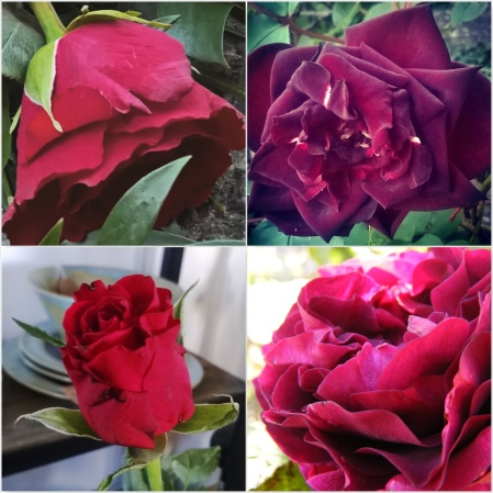 Red-Roses-The-Last-Krystallos
