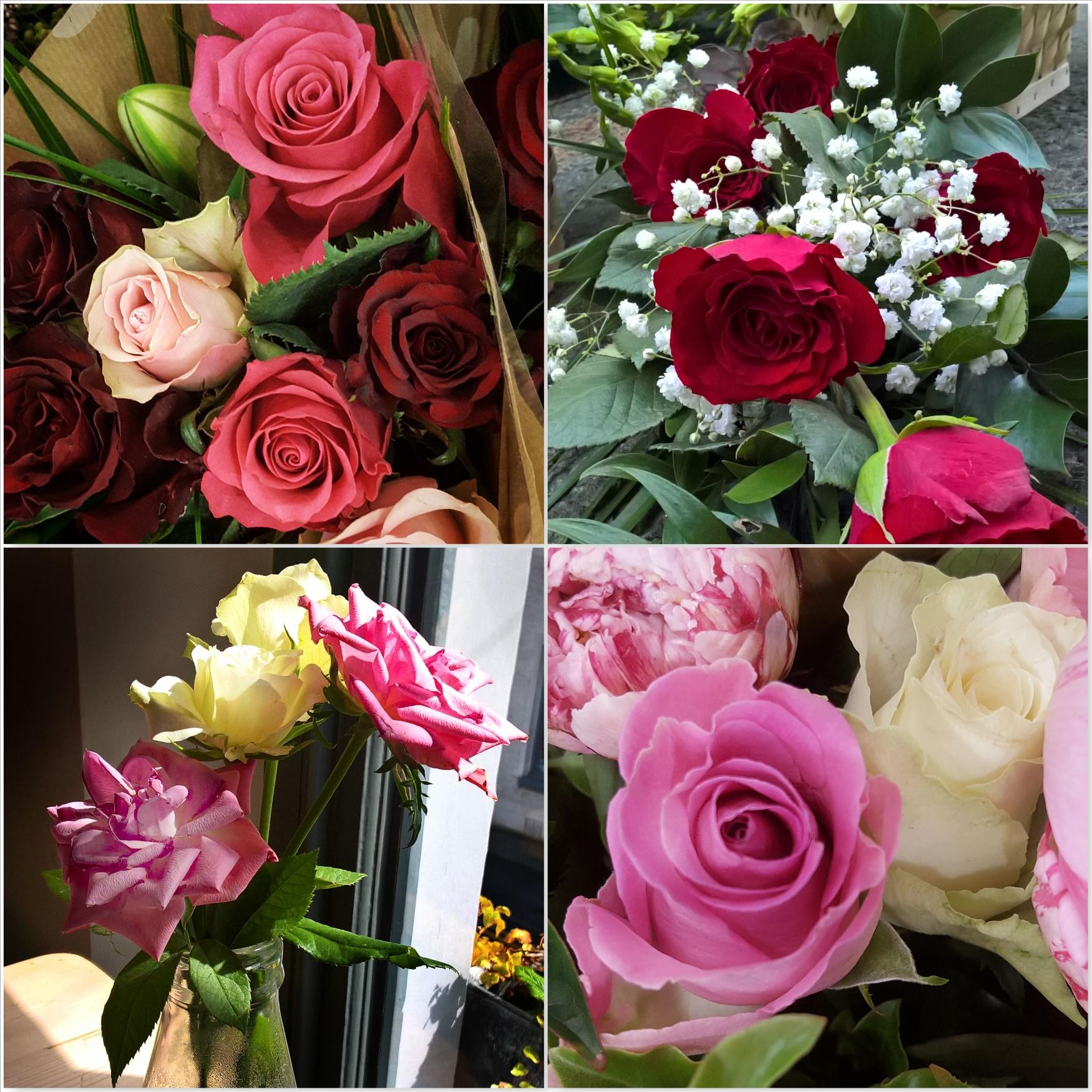 Roses-The-Last-Krystallos