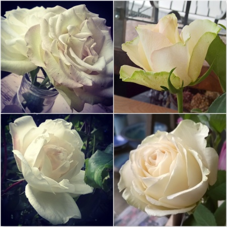 White-Roses-The-Last-Krystallos