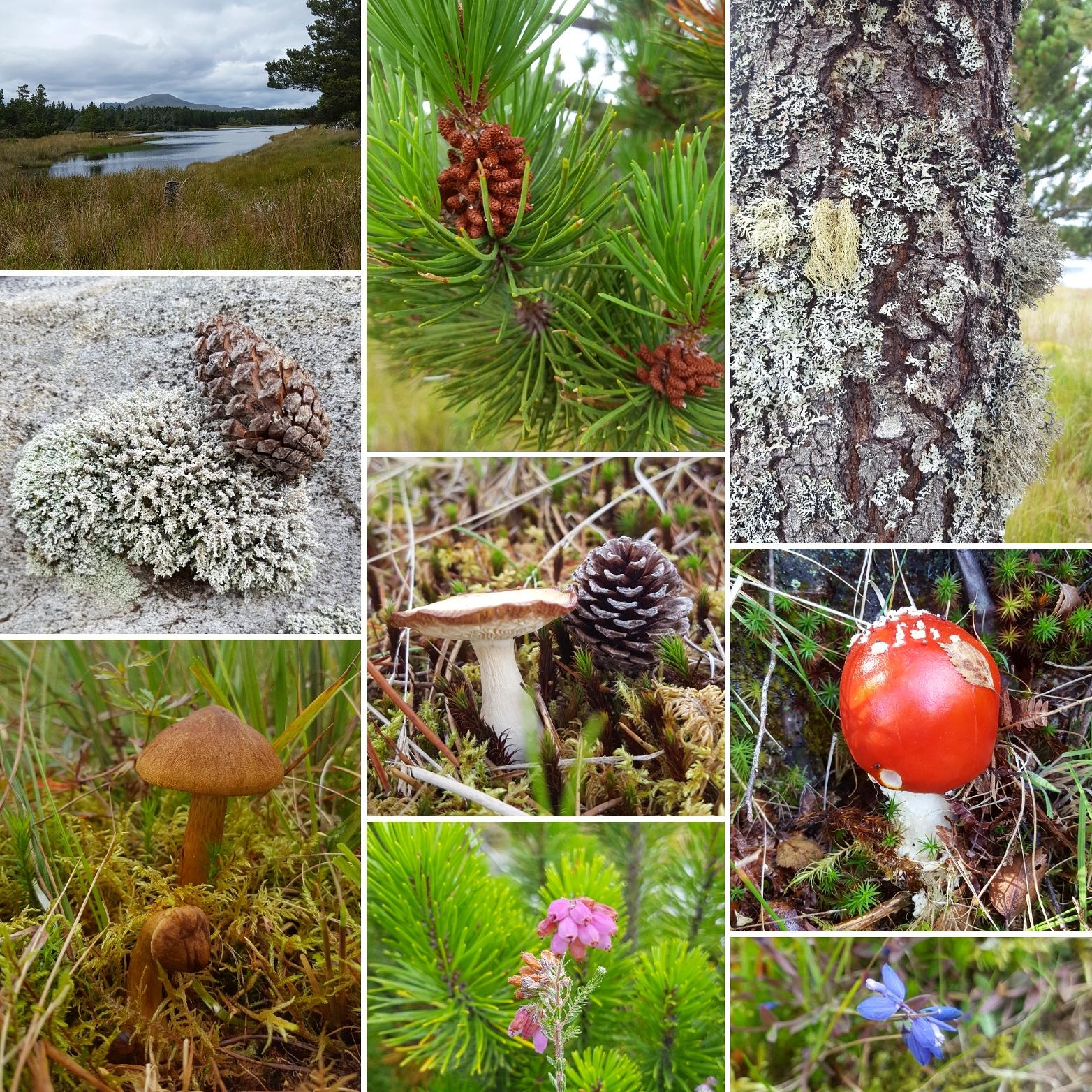 Forest nr Altnaharra - The Last Krystallos