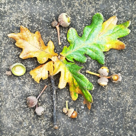 Acorns and Oak Leaves - Be Part of Autumn - The Last Krystallos