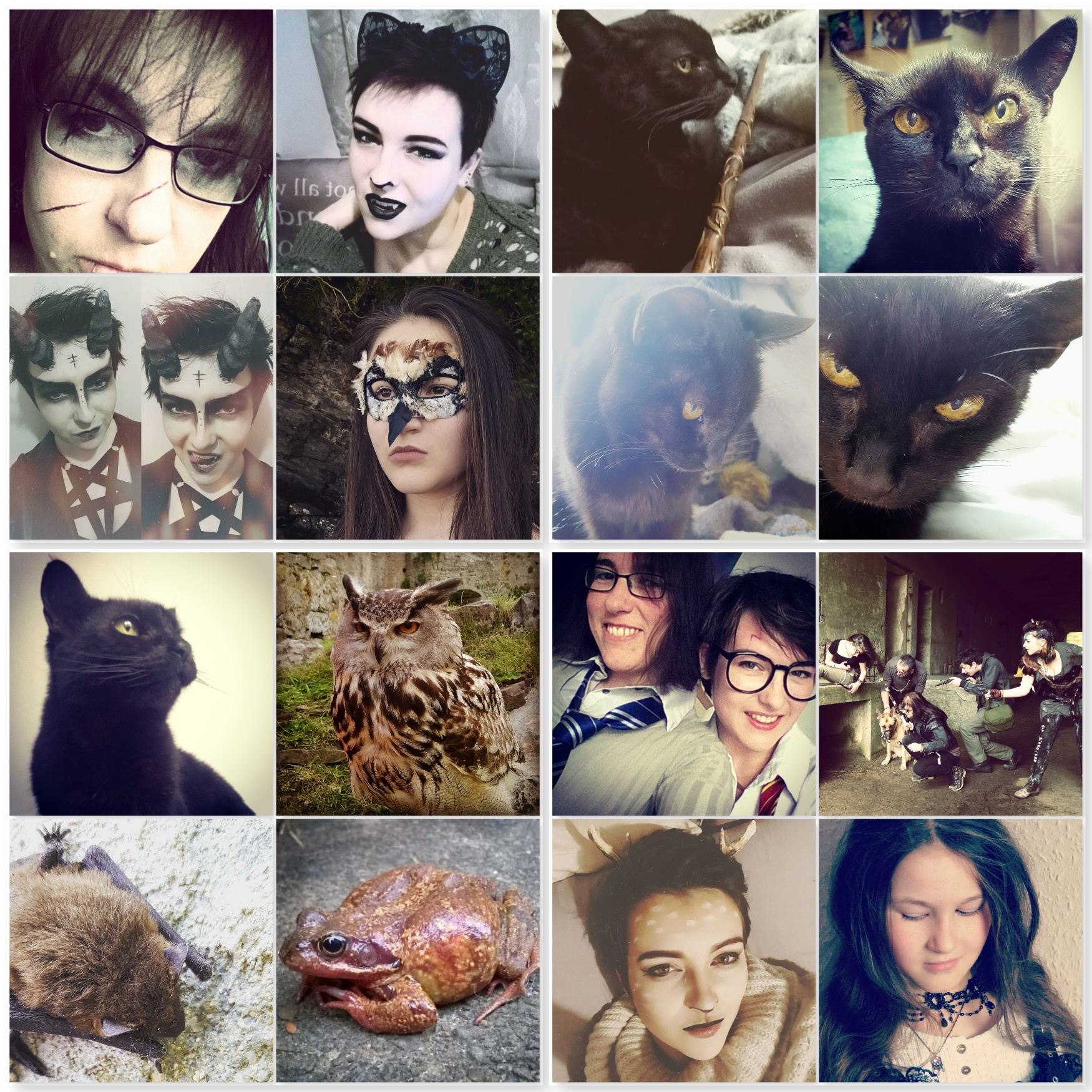 Halloween - Black Cats, Owl, Toad, Bats, Demon, Harry Potter - The Beast Bits of Halloween - The Last Krystallos