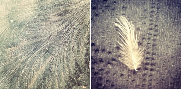 Frost swirls like feathers and a small white feather - the last krystallos blogpost
