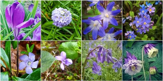 Crocus - Primula Denticulata - Chinodoxa - Forget-me-nots - Vinca - Wild Violet - Bluebells - Aquilegia