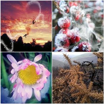 A Symphony of Seasons © Lisa Shambrook