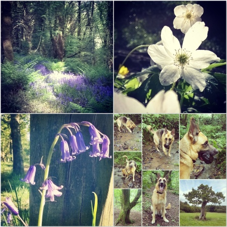 Bluebells - anemone - Roxy - Green Castle Woods - The Last Krystallos