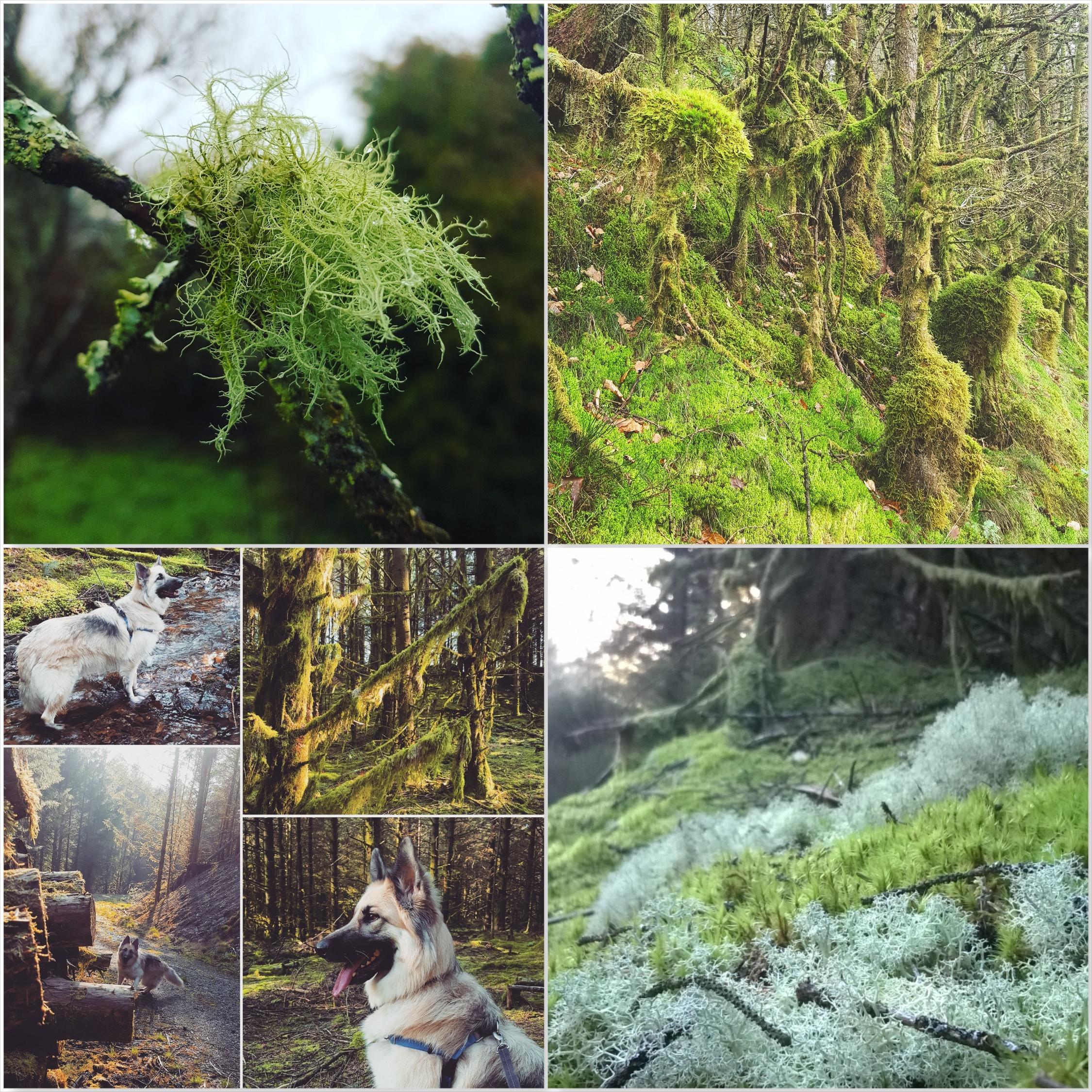 Brechfa moss - Kira - Brechfa Forest - The Last Krystallos