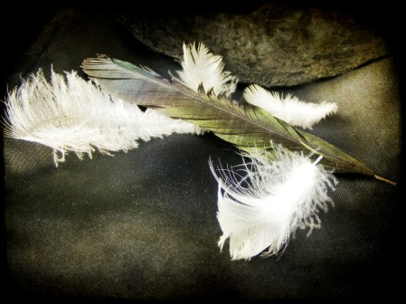 white and dark feathers by the last krystallos