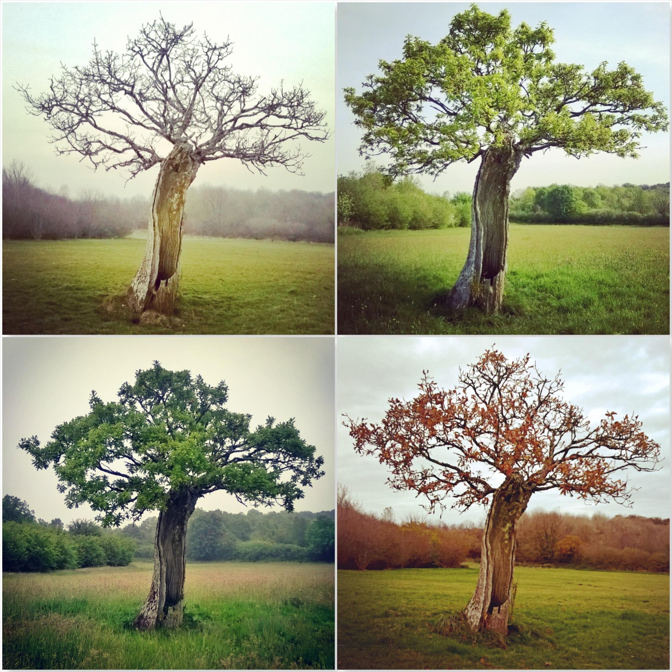 Four seasons - Old Oak - Green Castle Woods - The Last Krystallos