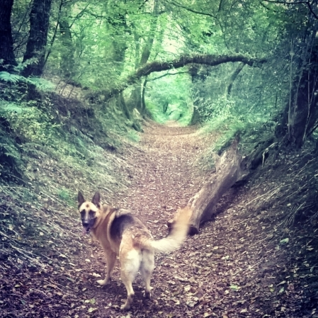 Roxy - Green Castle Woods - The Last Krystallos