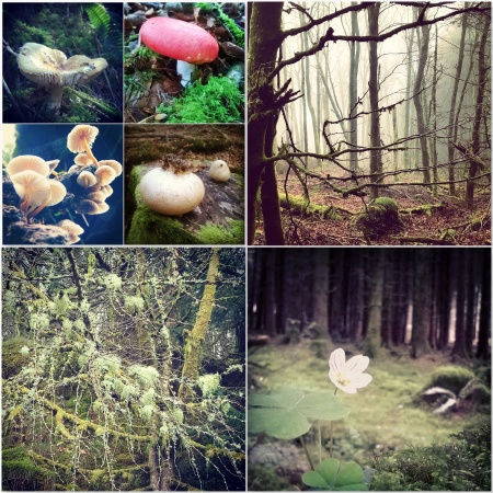 Toadstools mushrooms - fog - reindeer moss - oxalis - Brechfa Forest - The Last Krystallos
