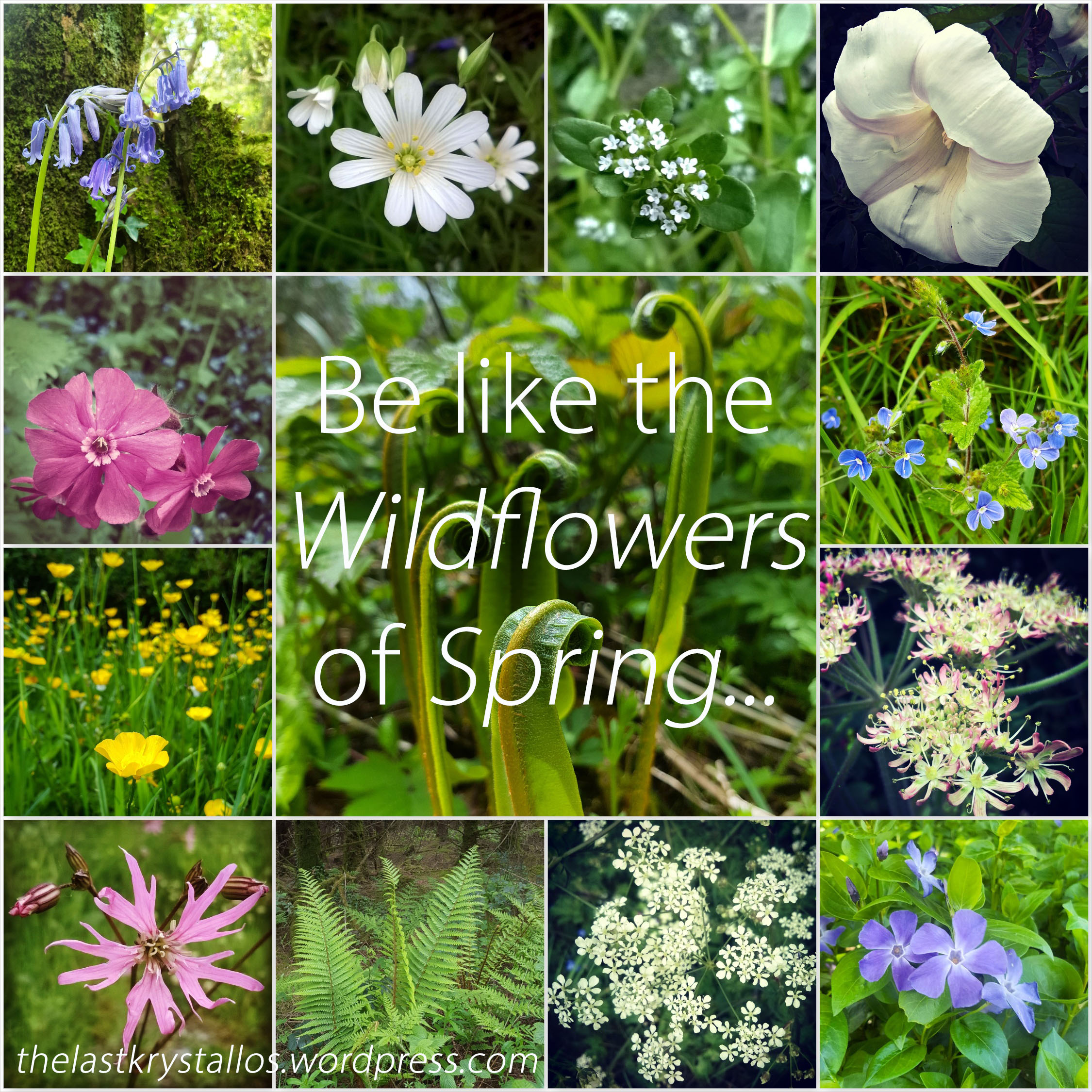 Be like the Wildflowers of Spring... The Last Krystallos