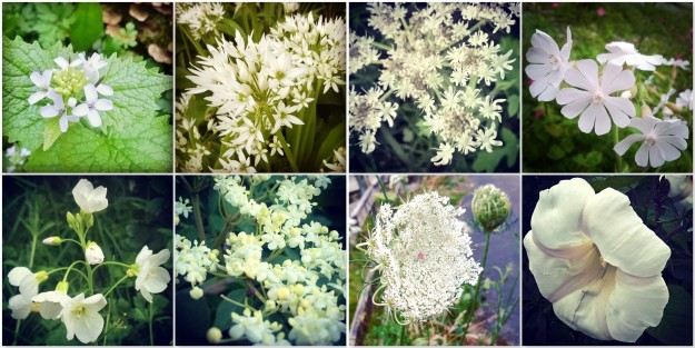 Garlic Mustard - Wild Garlic - Cow Parsley - White Campion - Cuckoo Flower - Elderflower - Wild Carrot - Columbine