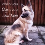 When Your Dog Is Your Soul Mate - The Last Krystallos