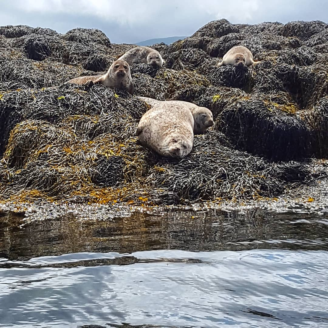 Dunvegan Seals - The Last Krystallos