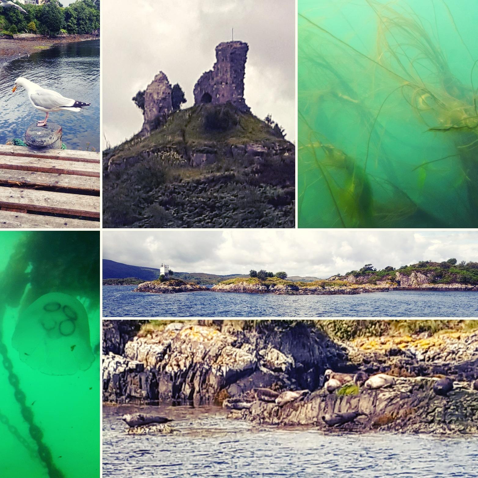 Portree, Kyleakin, Underwater and seals in Kyle of Lochalsh - The Last Krystallos