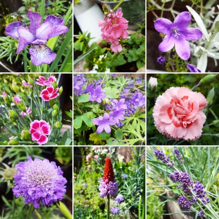 Garden flowers June 2019 - The Last Krystallos