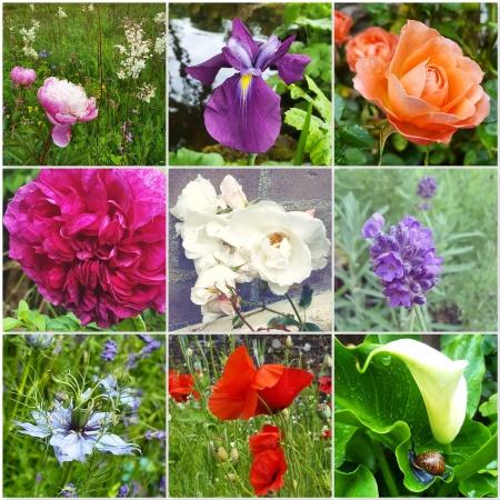 Summer Flowers 2019 - The Last Krystallos