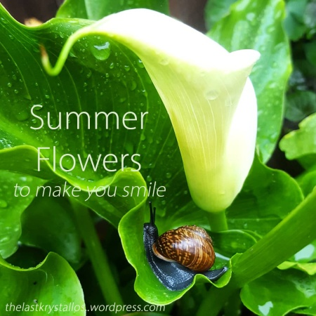 Summer Flowers to make you smile - The Last Krystallos