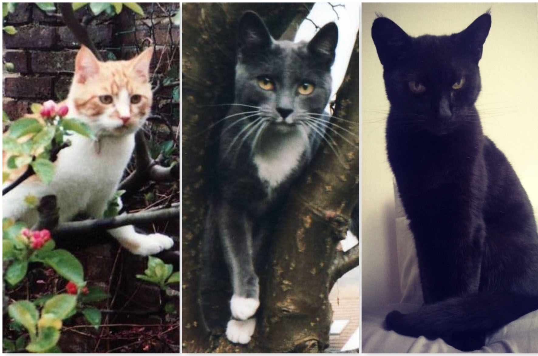 Rusty - ginger cat, Misty - grey cat, and Raven - black cat