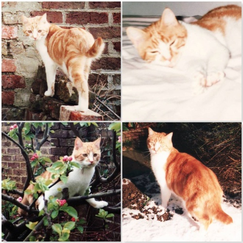 four photos of Rusty ginger cat. ONe on bricks, one asleep on bed, one in a tree, one in snow.