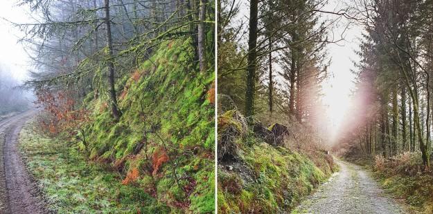 Images of January Brechfa Forest trees