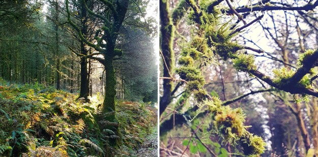 Images of October Brechfa Forest trees