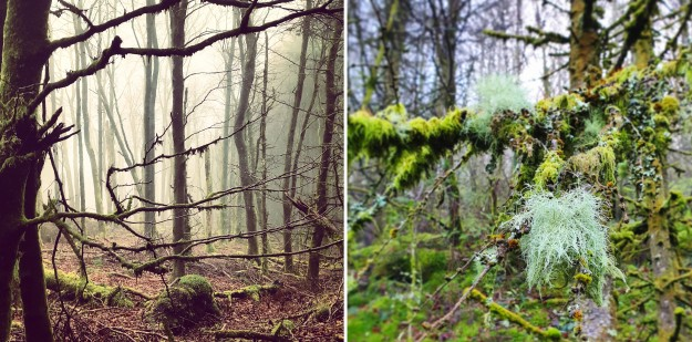 Images of February Brechfa Forest trees
